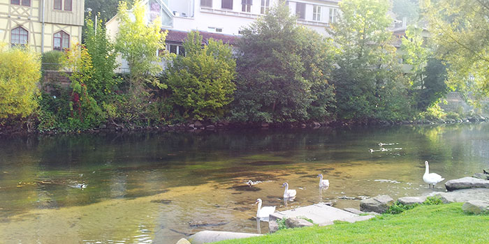 calw-diversion-naturaleza-aguas-termales