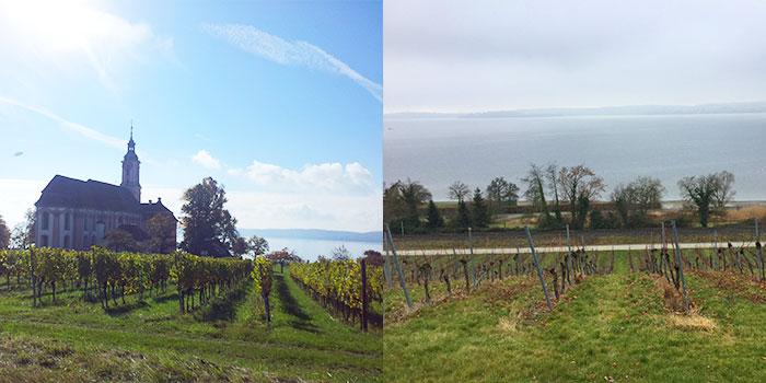 lago-constanza-vinos-agricultura