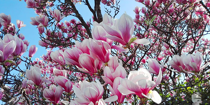 pforzheim-alemania-primavera-flores