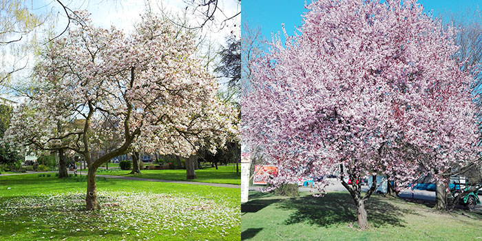 pforzheim-primavera-arboles-florecidos