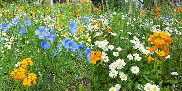 pforzheim-primavera-flores-del-campo