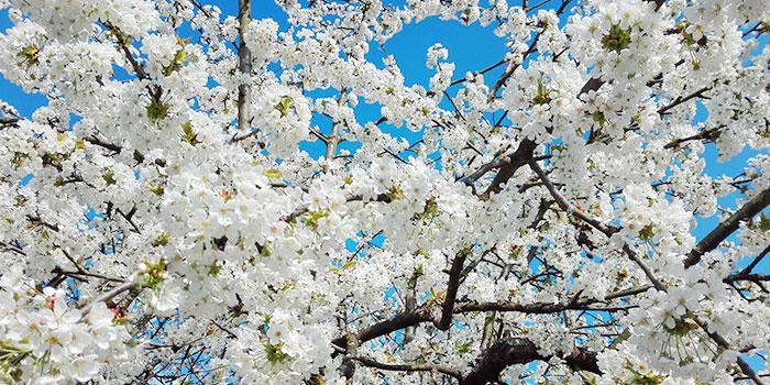 pfrozheim-primavera-flores-naturaleza