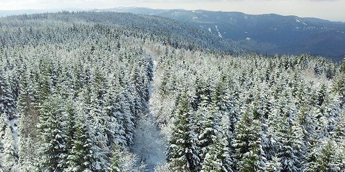 selva-negra-alemania-bosques-viajes