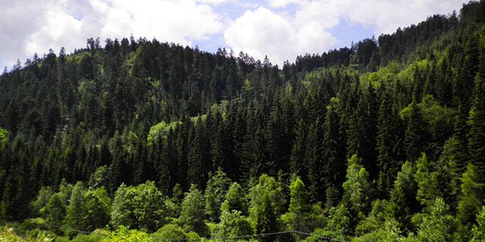 selva-negra-alemania-naturaleza-vacaciones