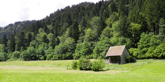 selva-negra-alemania-vacaciones-verano