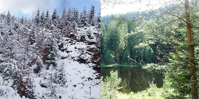 selva-negra-alemania-viajes-bosques