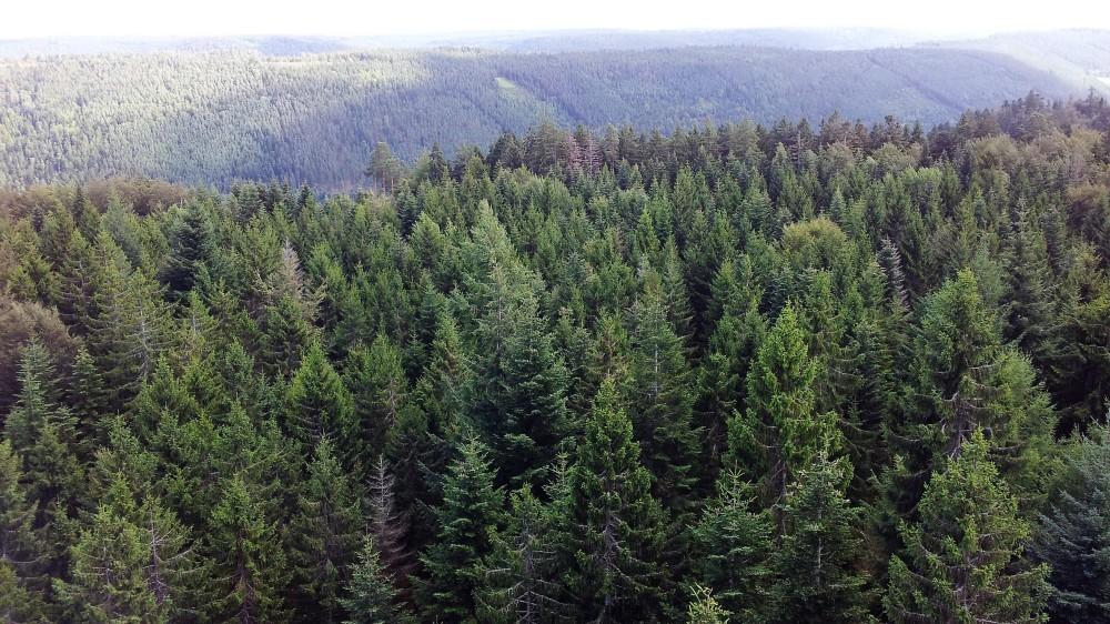 nordschwarzwaldtag-selva-negra-don-viajon-naturaleza-alemania