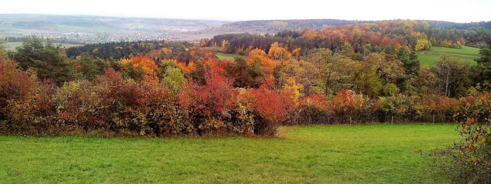selva-negra-don-viajon-nordschwarzwaldtag-aventura-alemania