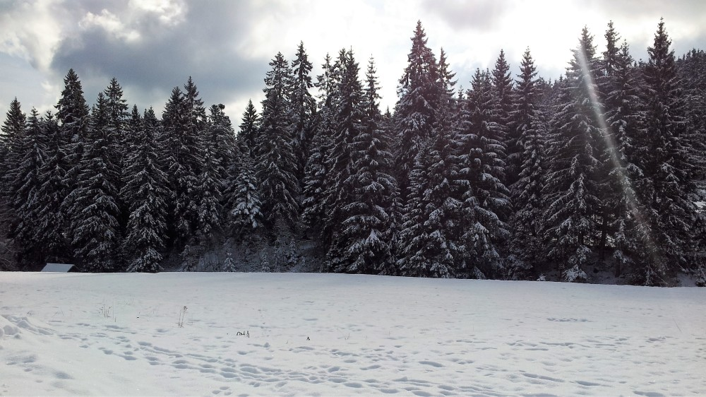 selva-negra-nordschwarzwaldtag-donviajon-turismo-alemania