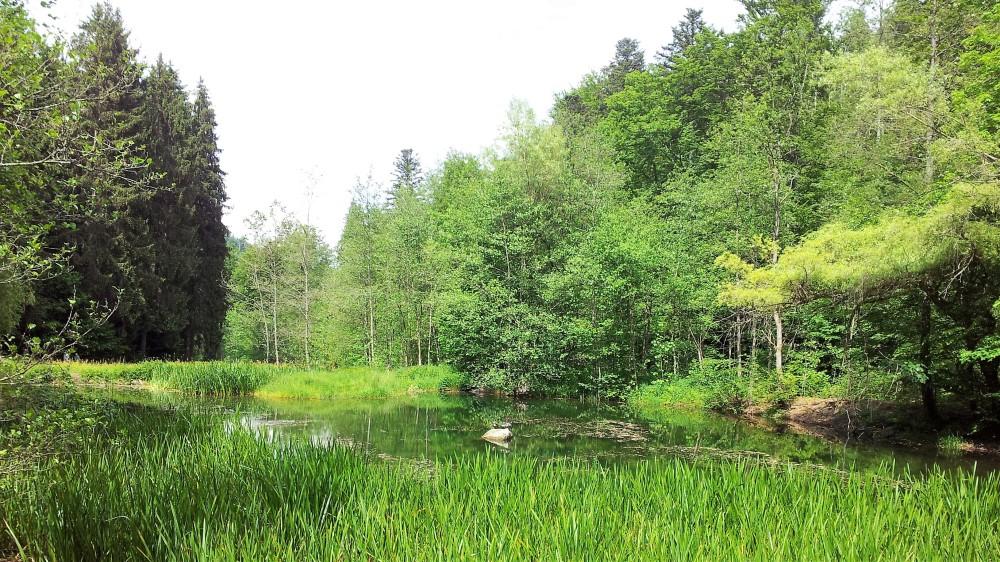 selva-negra-nordschwarzwaldtag-senderismo-don-viajon-alemania