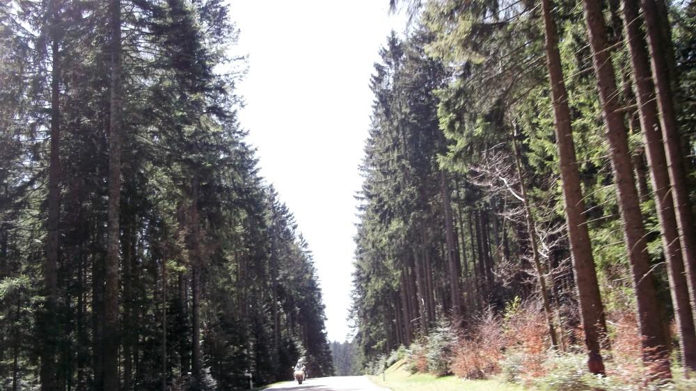 Baden-Wurttemberg-carreteras-don-viajon-bosques-alemania