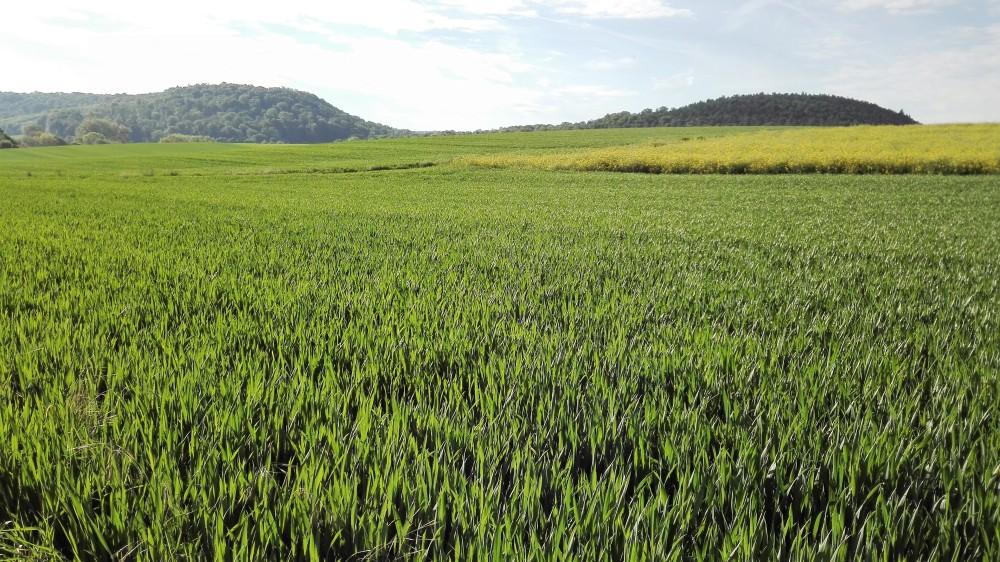 Baden-Wurttemberg-cultivos-don-viajon-agricultura-alemania