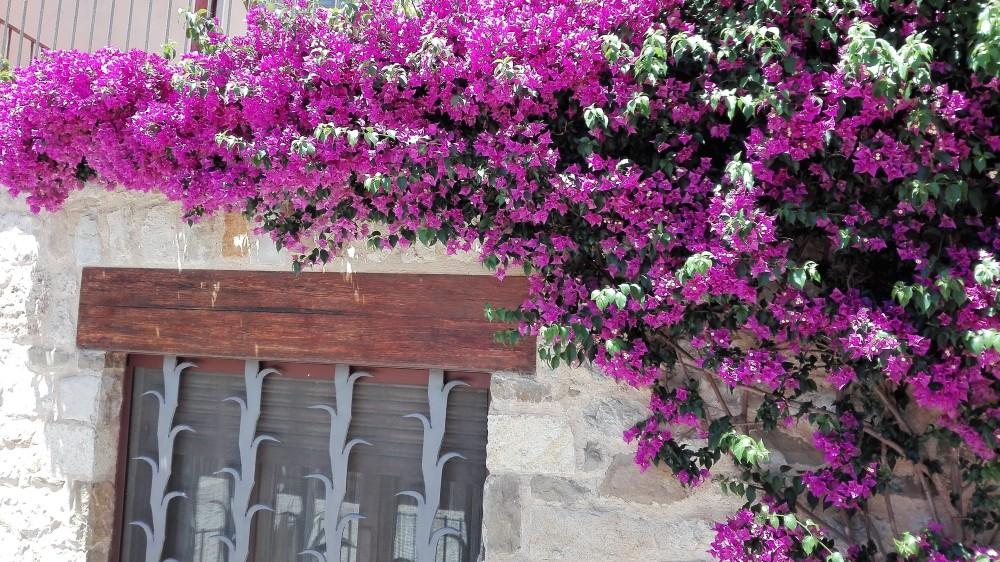 Besalu-jardines-naturaleza-don-viajon-espana