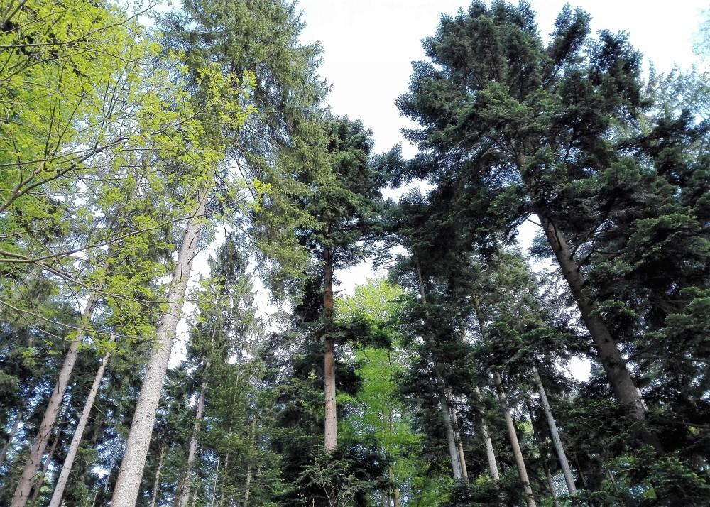 Baden-Wurttemberg-selva-negra-don-viajon-senderismo-alemania