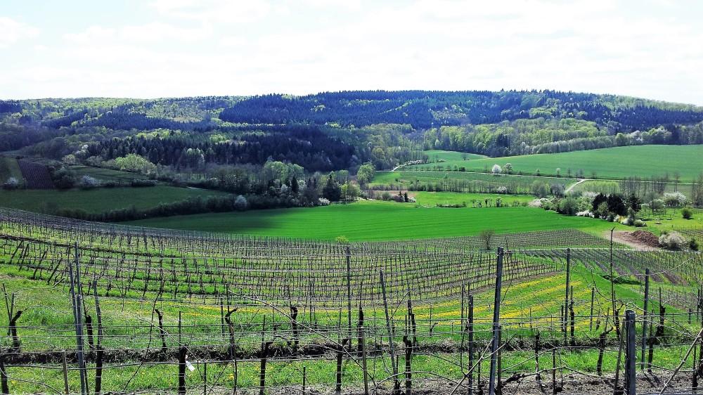 Baden-Wurttemberg-vinos-don-viajon-gastronomia-alemania