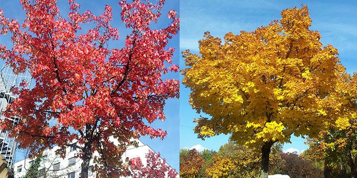 arboles-coloridos-donviajon-otono-naturaleza-belleza-alemania