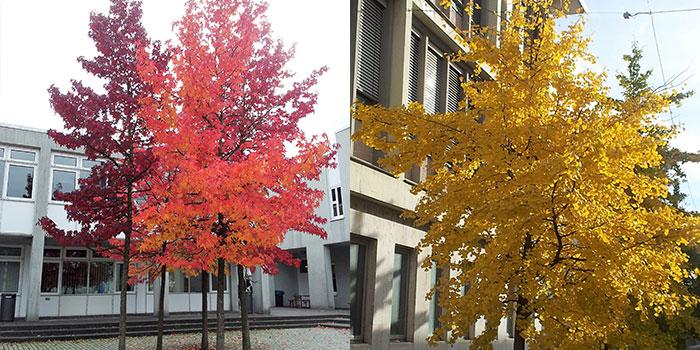 arboles-de-colores-donviajon-otono-alemania-naturaleza