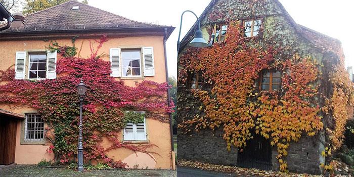 casas-de-colores-otono-donviajon-naturaleza-belleza-alemania