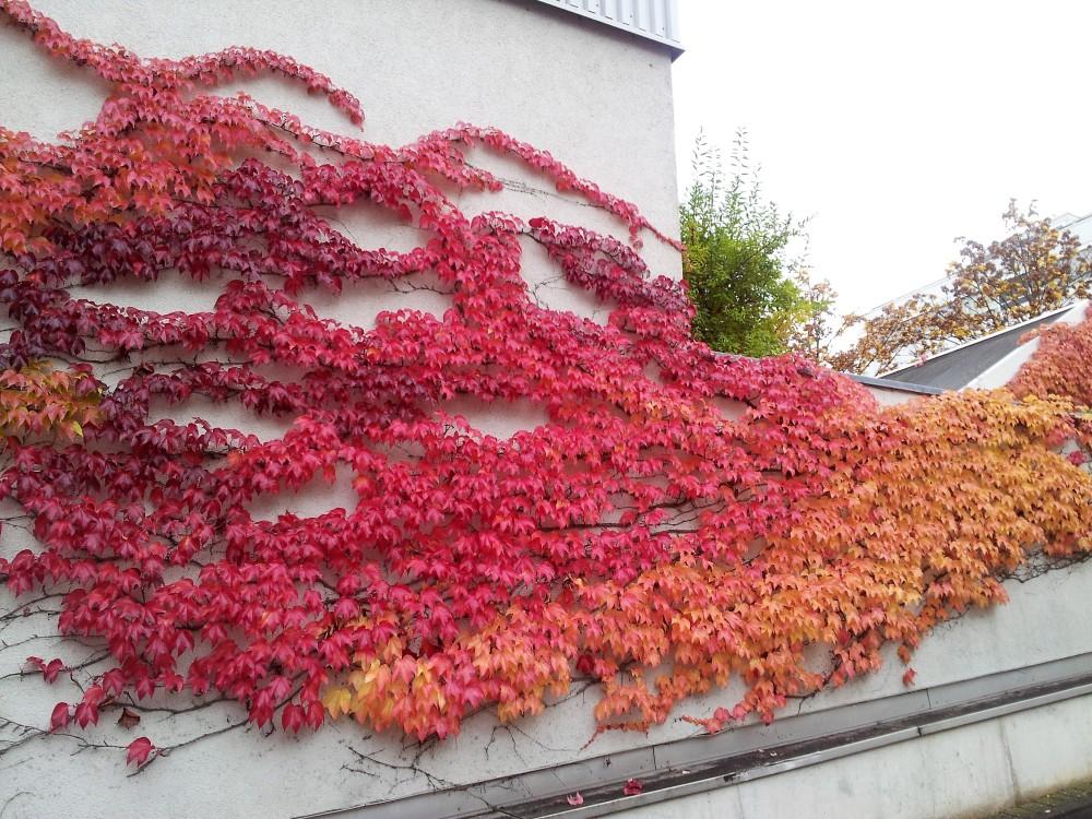 colores-del-otono-donviajon-naturaleza-fascinante-alemania