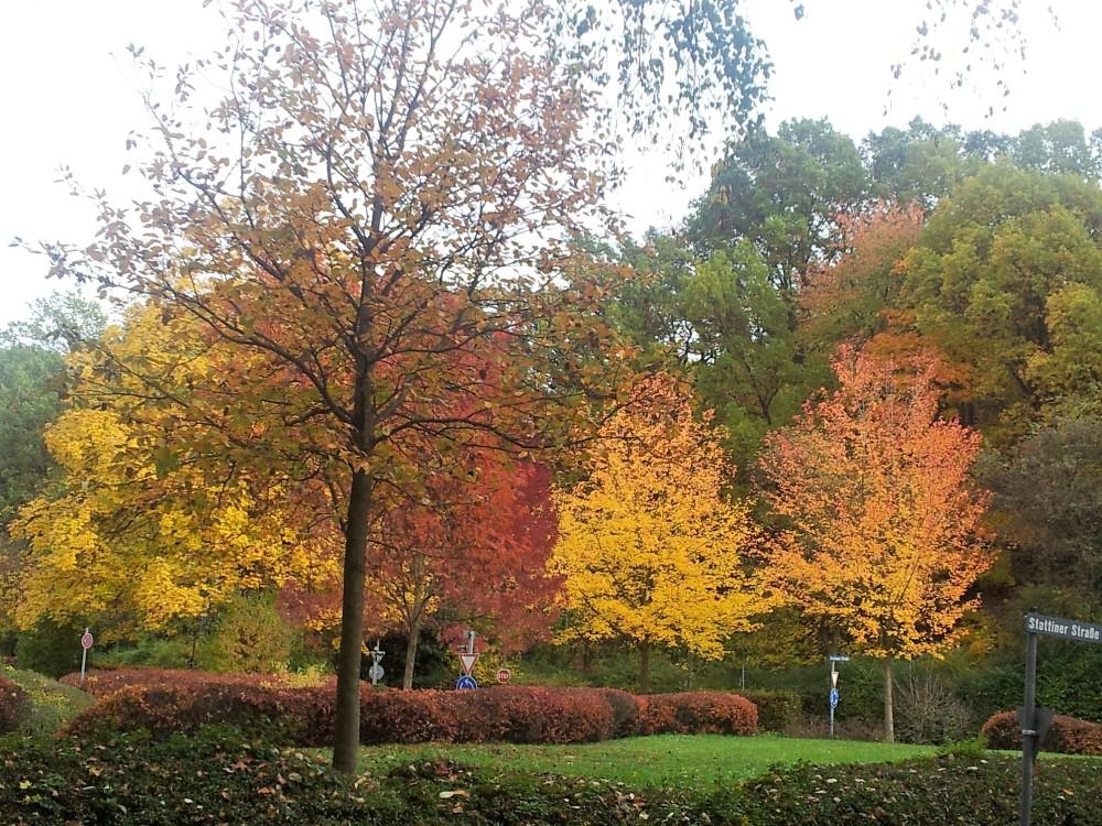 fascinante-colorido-del-otono-donviajon-naturaleza-alemania