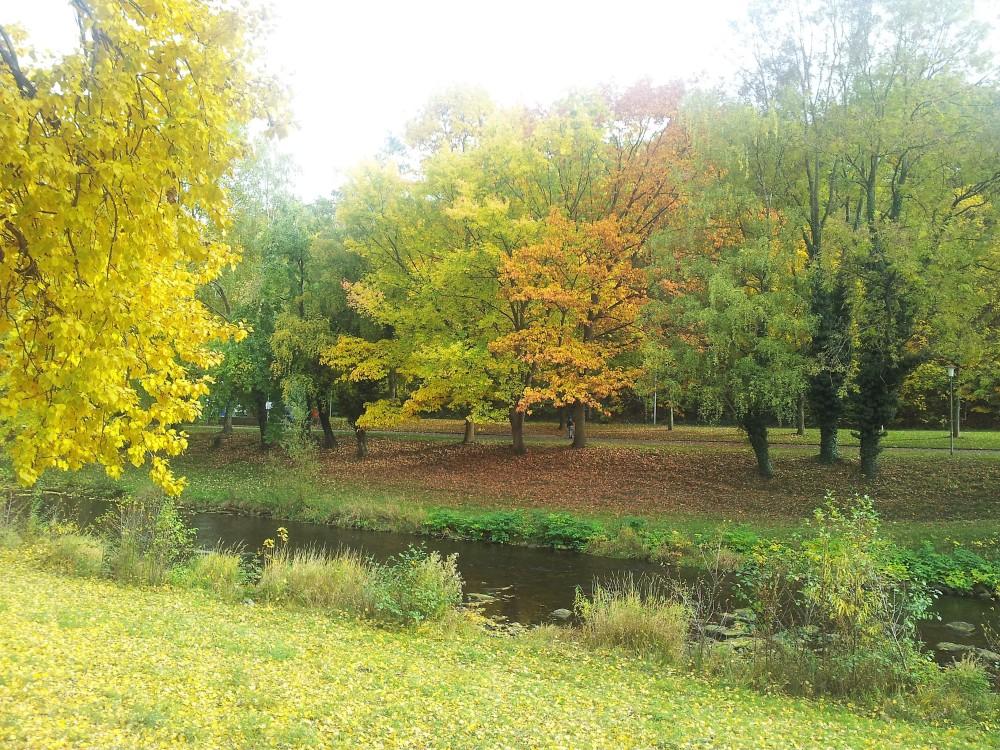 herbst-rio-enz-donviajon-bosques-selva-negra-alemania