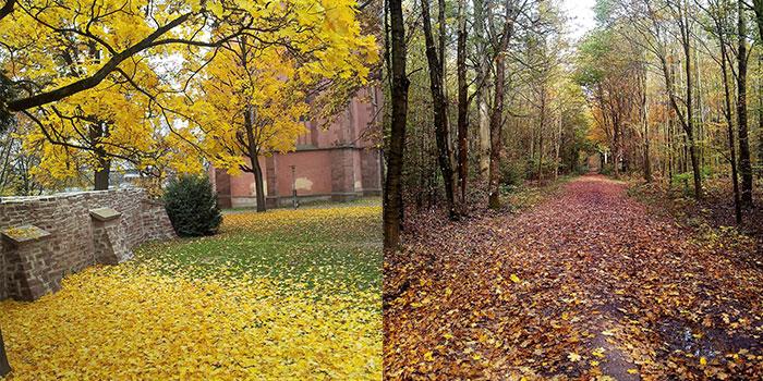 otono-donviajon-hojas-secas-bosques-alemania
