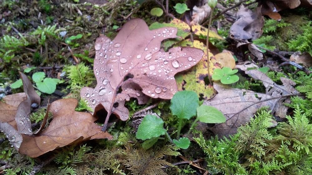 otono-hojas-secas-donviajon-naturaleza-colores-alemania