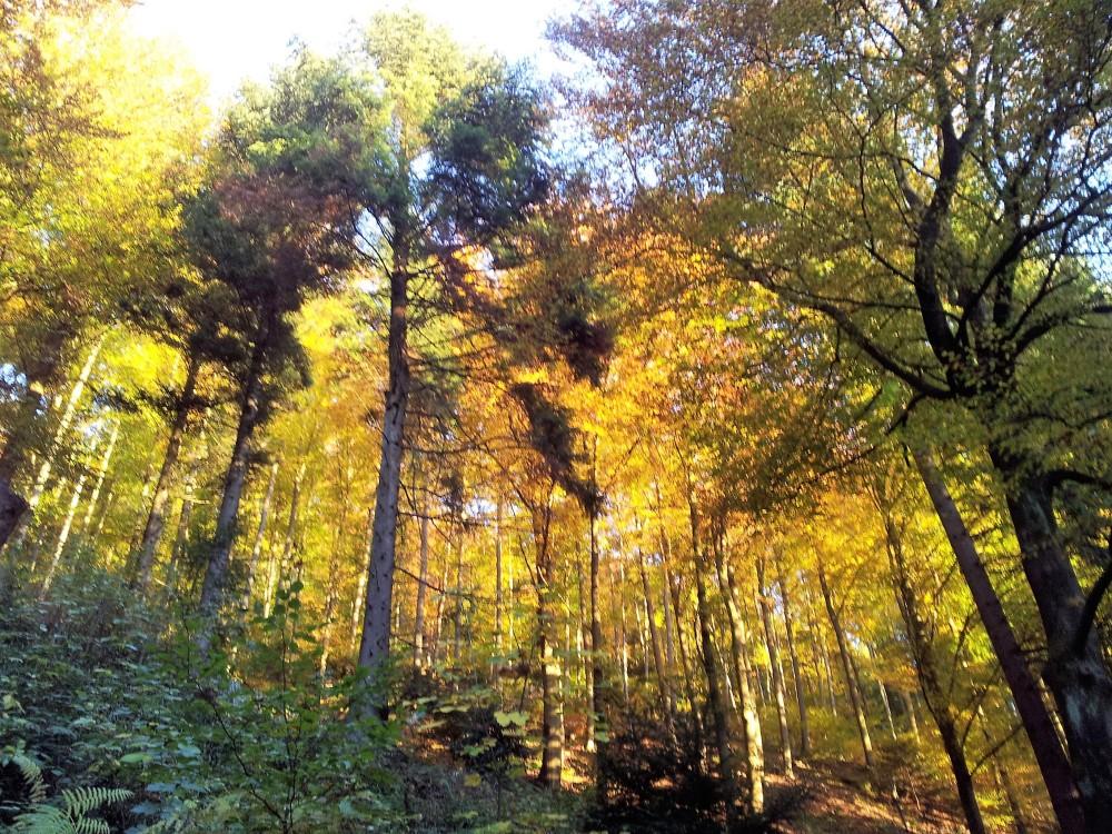 Selva-negra-donviajon-bosques-otono-naturaleza-colorido