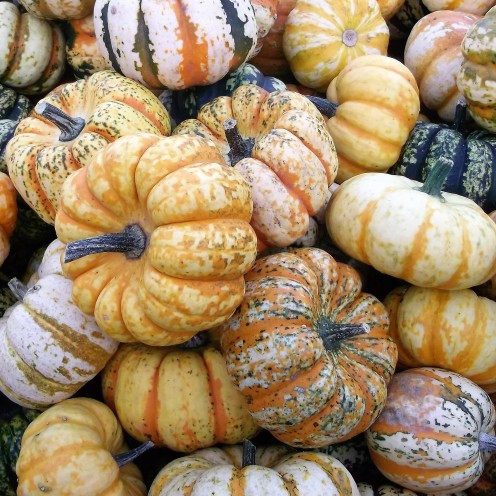 variedades-mundiales-de-calabazas-donviajon-backundfullkuerbis-festival-de-otono-ludwigsburg-alemania