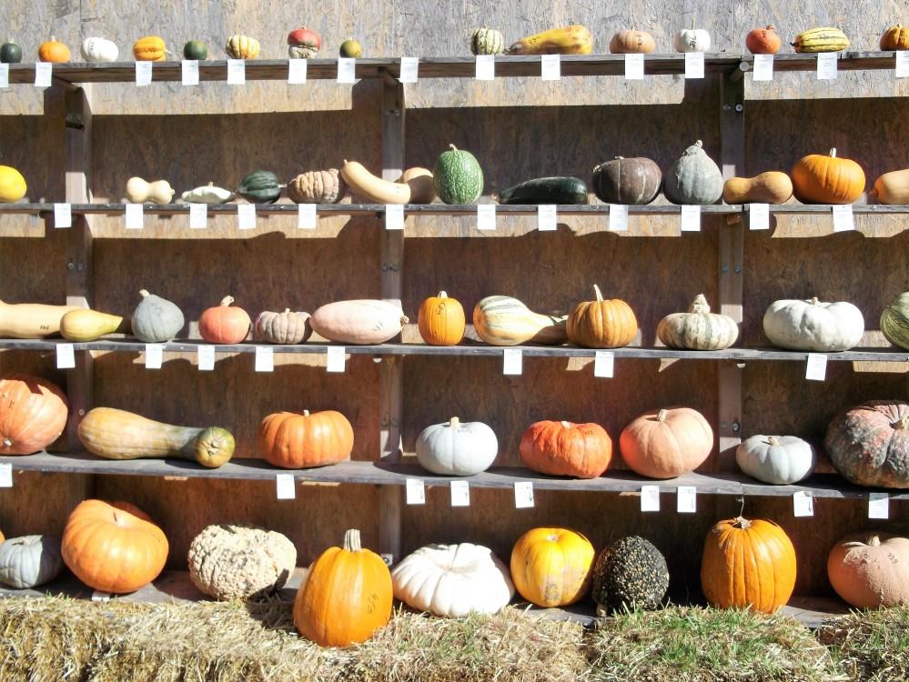 variedades-mundiales-de-calabazas-donviajon-festival-otono-palacio-ludwigsburg-alemania