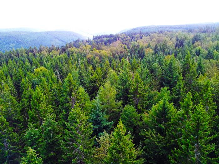 BadWildbad-baumwipfelpfad-donviajon-turismo-aventura-naturaleza-Selva-Negra-bosques-de-hayales-Alemania- Baden-Wurttemberg
