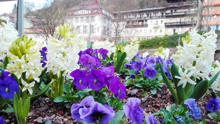 BadWildbad-Kurpark-donviajon-turismo-sanacion-naturaleza-en-primavera-Selva-Negra-Baden-Wurttemberg-Alemania