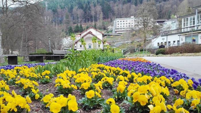 BadWildbad-un-bello-jardin-en-primavera-donviajon-turismo-sanacion-naturaleza-Selva-Negra-Baden-Wurttemberg-Alemania