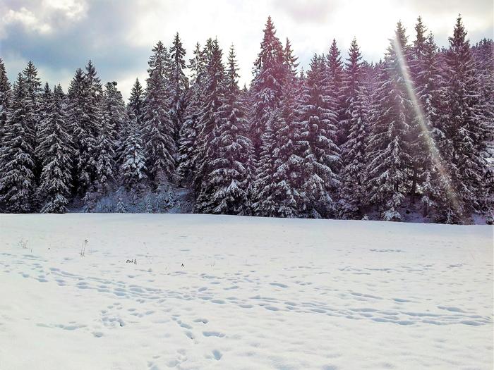 Kaltenbronn-Gernsbach-don-viajon-turismo-de-invierno-naturaleza-senderismo-esqui-Selva-Negra-Baden-Wurttemberg-Alemania