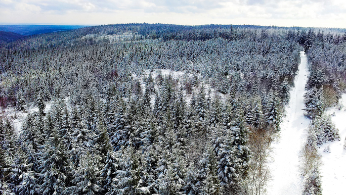 Kaltenbronn-Gernsbach-don-viajon-turismo-de-invierno-naturaleza-senderismo-Selva-Negra-Alemania