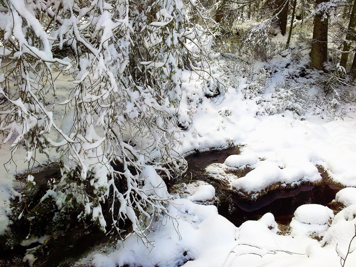 Kaltenbronn-Gernsbach-donviajon-turismo-de-invierno-naturaleza-senderismo-Hohlohsee-Selva-Negra-Alemania
