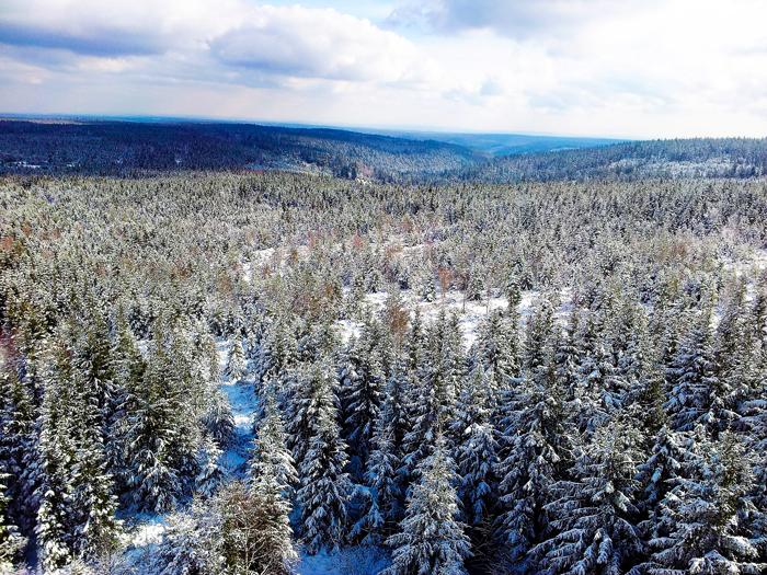 Kaltenbronn-Gernsbach-donviajon-turismo-de-invierno-senderismo-deportes-de-invierno-en-la-Selva-Negra-Alemania
