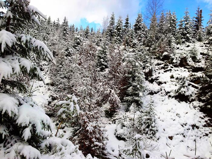 Kaltenbronn-Gernsbach-Hohlohsee-donviajon-turismo-de-invierno-naturaleza-senderismo-esqui-Selva-Negra-Alemania