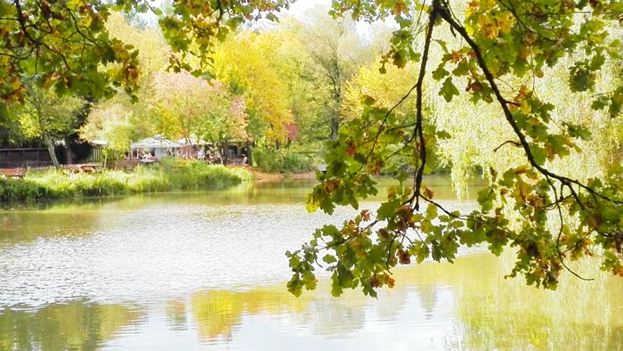 Pforzheim-Seehaus-donviajon-naturaleza-bosques-lagos-turismo-Selva-Negra-Baden-Wurttemberg-Alemania