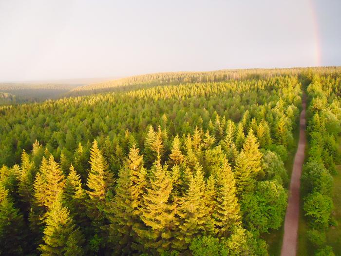 La-Selva-Negra-donviajon-turismo-cultural-naturaleza-aventura-Baden-Wurttemberg-Alemania