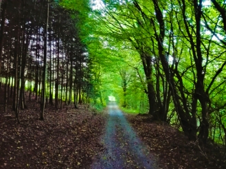 Buechenbronn-bosques-don-viajon-turismo-recreativo-senderismo-Selva-Negra-Baden-Wurttemberg-Alemania