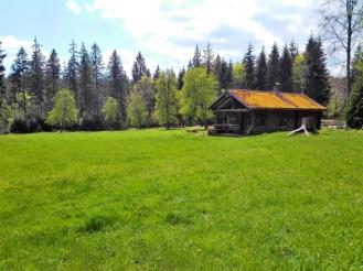Dobel-don-viajon-turismo-aventura-bosques-Selva-Negra-senderismo-Baden-Wurttemberg-Alemania