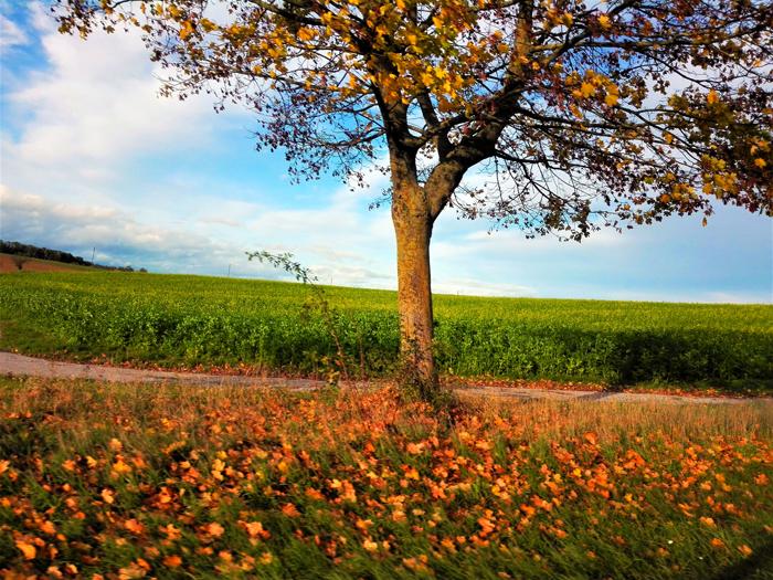 Kraichgau-naturaleza-Eppingen-don-viajon-turismo-recreativo-cultural-Baden-Wurttemberg-Alemania