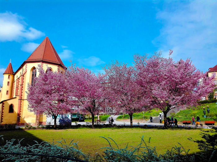 Pforzheim-el-patio-de-las-flores-don-viajon-turismo-urbano-recreativo-naturaleza-en-flor-primavera-Alemania