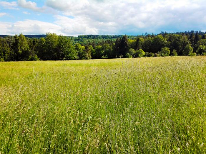 Graefenhausen-cultivos-de-trigo-don-viajon-turismo-rural-rutas-senderismo-aventura-Baden-Wurttemberg-Alemania