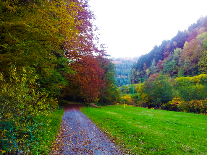 Bad-Wildbad-rutas-de-senderismo-valle-del-rio-Enz-don-viajon-turismo-recreativo-rural-Selva-Negra-Baden-Wurttemberg-Alemania