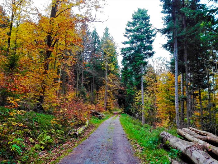 bosques-de-hayedos-selva-negra-otono-don-viajon-turismo-recreativo-senderismo-Baden-Wurttemberg-Alemania