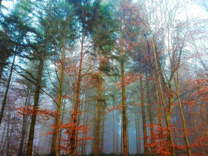 Heidelsheim-bosques-caminos-rurales-don-viajon-turismo-naturaleza-Baden-Wurttemberg-Alemania