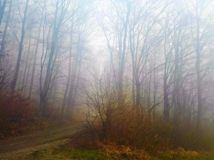 Heidelsheim-bosques-nubosos-don-viajon-turismo-recreativo-naturaleza-niebla-Baden-Wurttemberg-Alemania