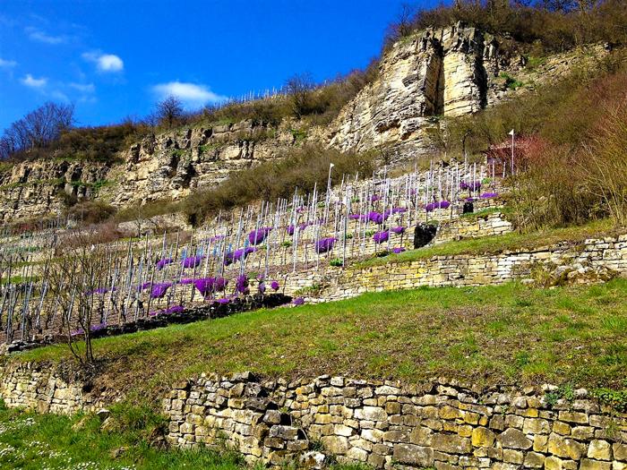 Muehlhausen-an-der- Enz-ruta-del-vino-de-Wurttemberg-don-viajon-turismo-gastronomico-etnologico-rutas-senderismo-ciclismo-valle-del-rio-Enz-Alemania